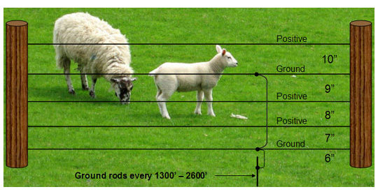 Electrobraid Fence for Sheep