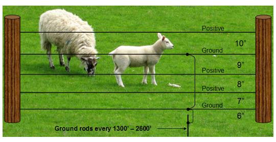 Sheep Fencing - The Healing Barn