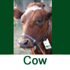 Click Here For Shoo!TAGs For Cows