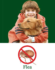 ShooTAG Canine Insect Control - Flea