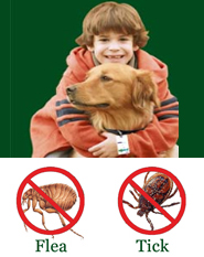 ShooTAG Canine Insect Control - Flea & Tick