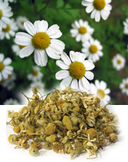 Hilton Herbs Herbs & Tinctures - Chamomile Flowers