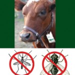 Shoo!TAG Cow – Fly & Mosquito