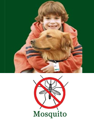 Shoo!TAG Dog  Insect Control - Mosquito