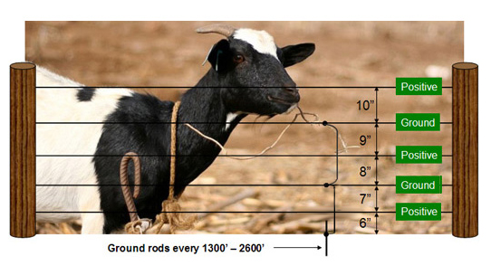 Electrobraid Fence for Goats