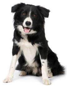 Dog - Hilton Herbs Canine