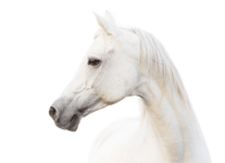 The Healing Barn Horse