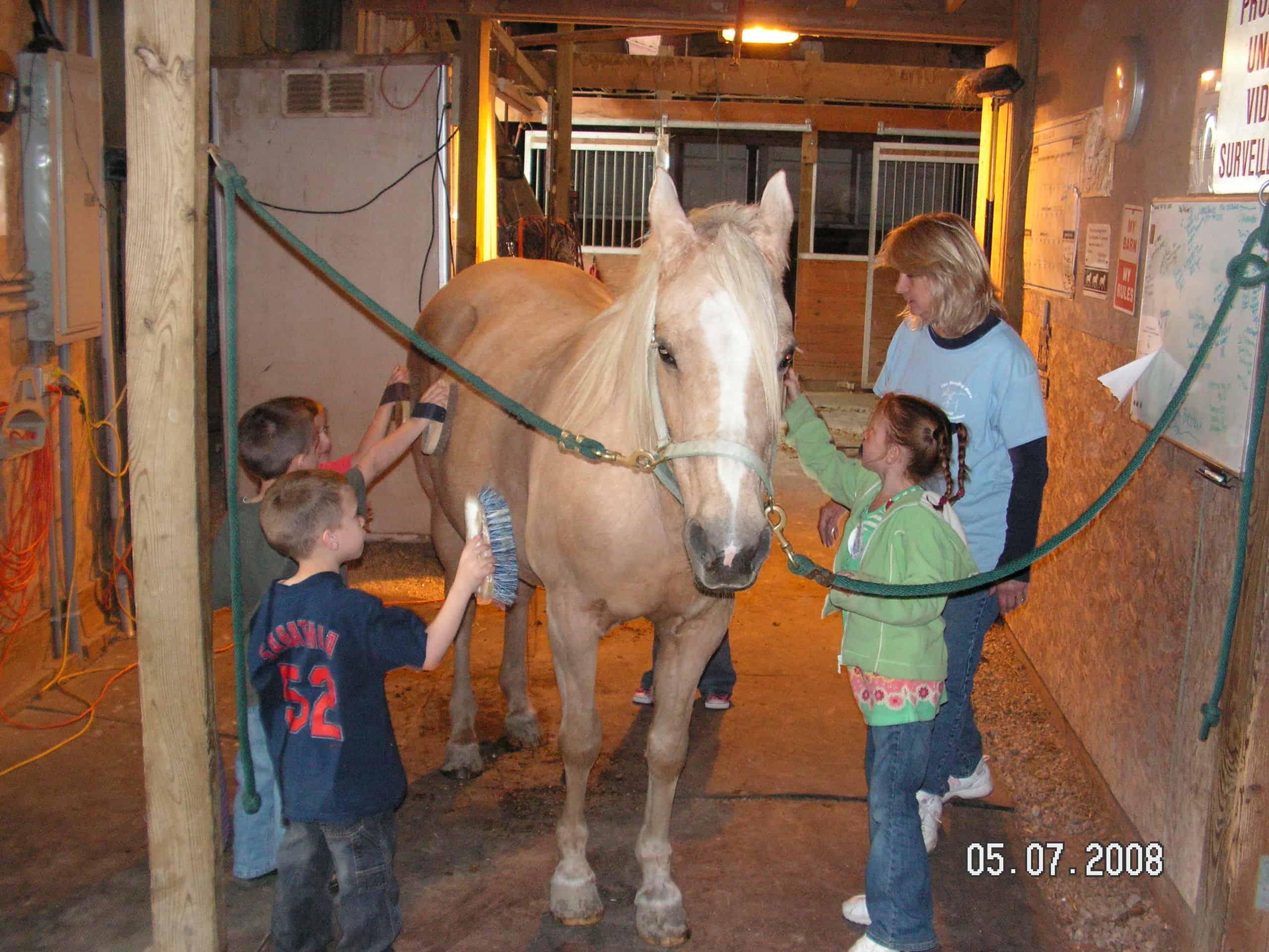 abuse women children horses the healing barnabuse women children horses